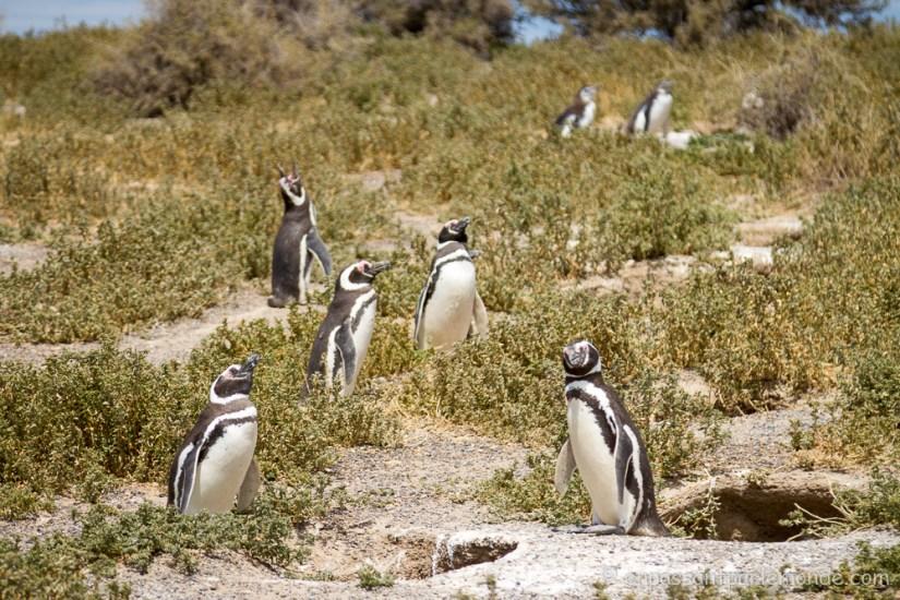 Argentine - Puerto Madryn-26