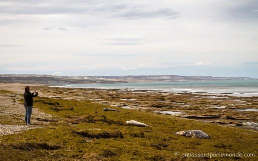 Argentine - Puerto Madryn-36