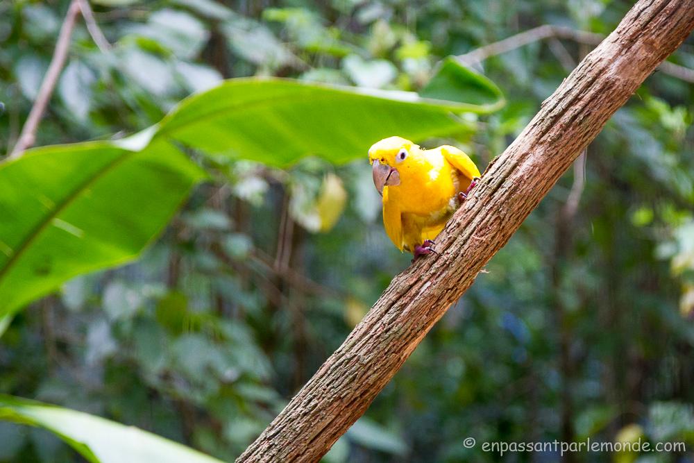 Brésil - Parque das Aves-17