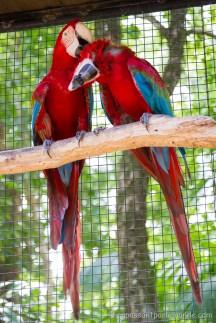 Brésil - Parque das Aves-19