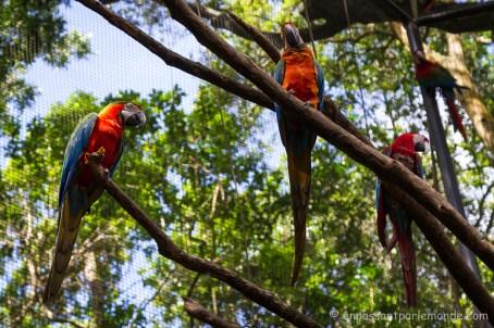 Brésil - Parque das Aves-23