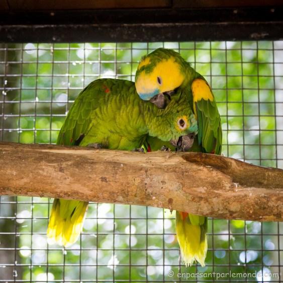 Brésil - Parque das Aves-24