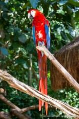 Brésil - Parque das Aves-32