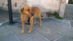 Bobi (2)