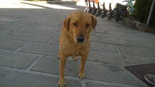 Bobi (3)