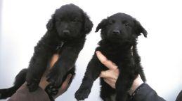 Emma e i suoi cuccioli (2)