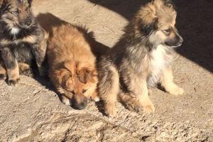 Altri 6 cuccioli