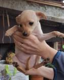 Ciccioli nati il 9 Gennaio (6)
