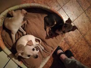 Cuccioli nati il 9 Gennaio (5)