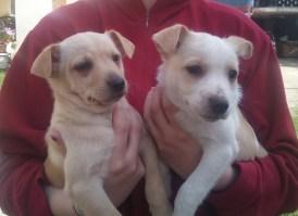 cuccioli di 3 mesi (1)
