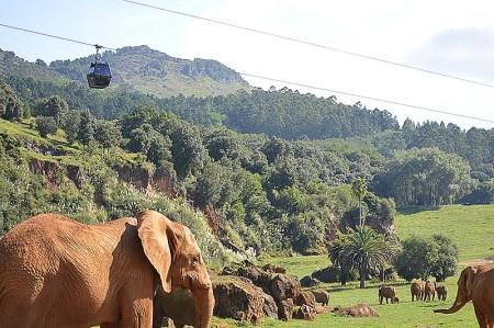 El Parque de la Naturaleza de Cabárceno celebra su 30 aniversario