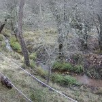 Osezna Éndriga en la finca Vasemana (León)