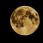 Luna lunera corta