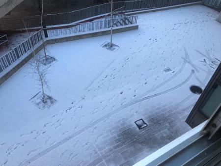 nevada león