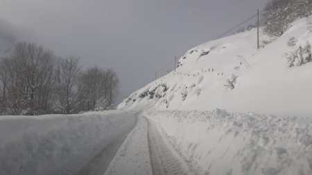 nevada maraña