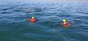 Marina ayuda en liberación de ballena jorobada en Ensenada