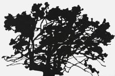 """Alexandre Hollan, """"Le Déchêné"""", grand chêne, 2012 Acrylique sur toile, H.130 x L.195 cm Collection particulière Courtesy Galerie Marie Hélène de La Forest Divonne © photo Illès Sarkantyu © ADAGP Paris 2016"""