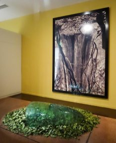 Giuseppe Penone, Ongle, 1987-1994 et Rodney Graham, Cedar Lighthouse Park, Vancouver, 1991