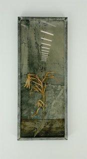Anselm Kiefer, Sans titre, s.d. Lys sur plque de plomb et verre, Collection Yvon Lambert