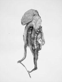 ©Douglas White - Octopus - 5 1,10 cm X 75cm