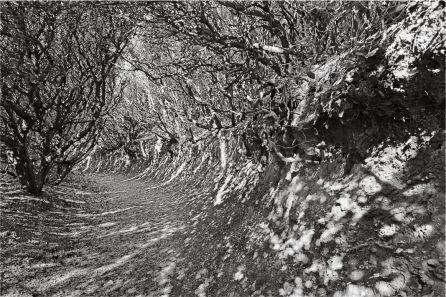 Pascal Fayeton, Chronotopie 12, 2014. Série Encres de Giens Photographie noir et blanc, 30 x 45 cm
