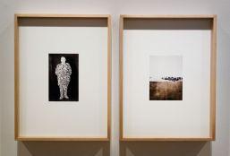 Hanna Rast , «Pine Needles» - Boutographies 2018 au Pavillon Populaire