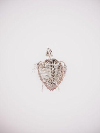Carlo Lombardi, «Dead Sea»