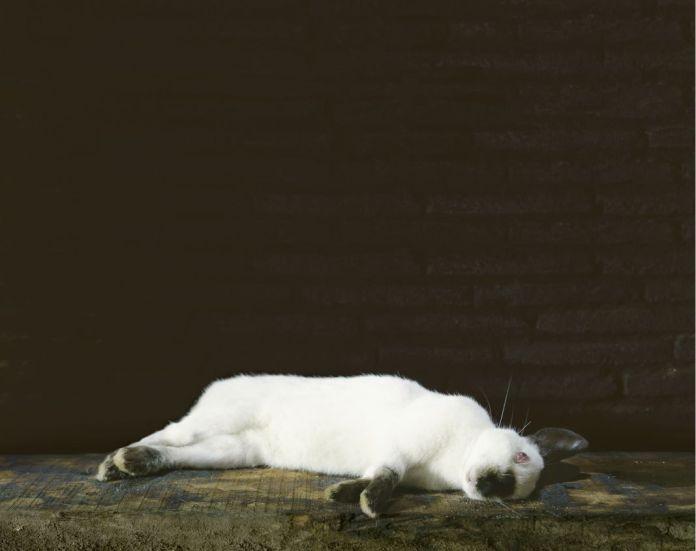 Veronique Ellena, Le lapin mort, série Les Natures mortes, 2007, épreuve argentique. Collection galerie Alain Gutharc, Paris