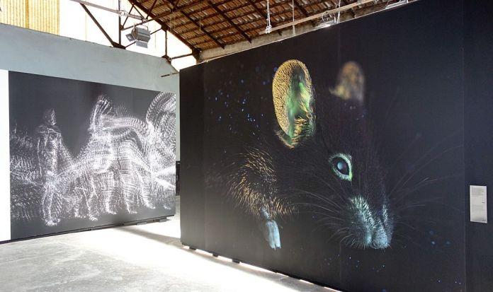 Matthieu Gafsou - H+ aux Rencontres Arles 2018 - 6 Posthumain - Vue de l'exposition