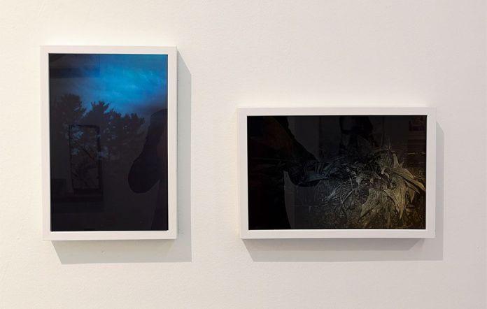 La Saga II - Double V Gallery – Sylvain Couzinet-Jacques - den Trees (blue) et Eden plants (yellow), 2016