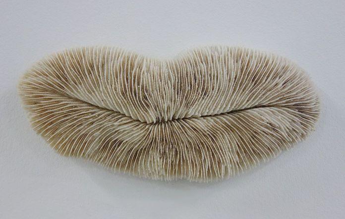 Amélie de Beauffort - Corail (collection de l'artiste) - Biomorphisme à La Friche de la Belle de Mai