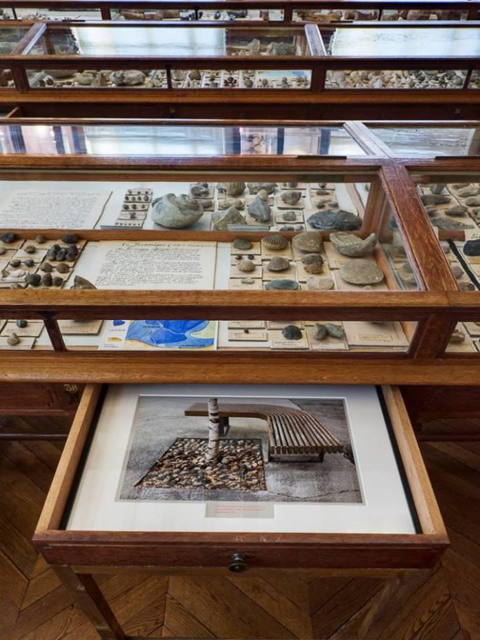 Sophie Calle - Cinq au Muséum d'histoire naturelle de Marseille - Photo © Florian Kleinefenn 02