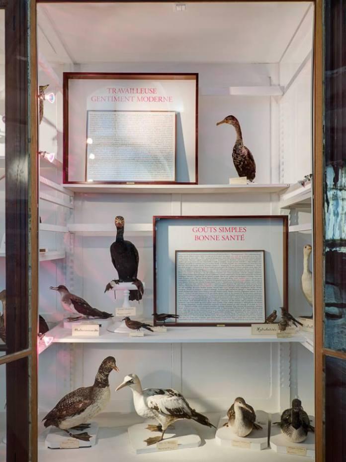 Sophie Calle - Cinq au Muséum d'histoire naturelle de Marseille - Photo © Florian Kleinefenn