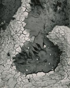 Joseph Jachna Water s.t. 1958-1961 Tirage sur papier aux sels d'argent © The Estate of Joseph Jachna