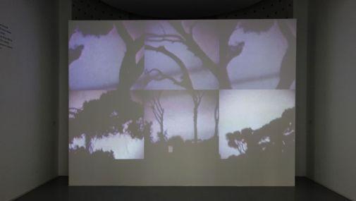 Ange Leccia - Les pins de la Villa Médicis, 1981-2019 - Viva Villa 2019 - Collection Lambert