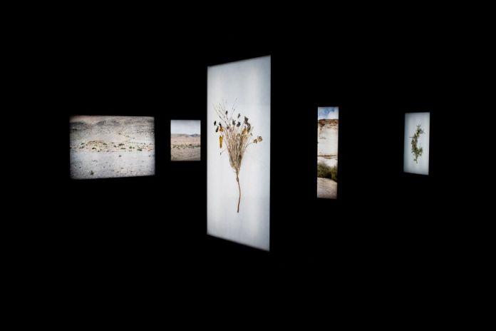 Abdessamad El Montassir - Surgir des cendres, 2020