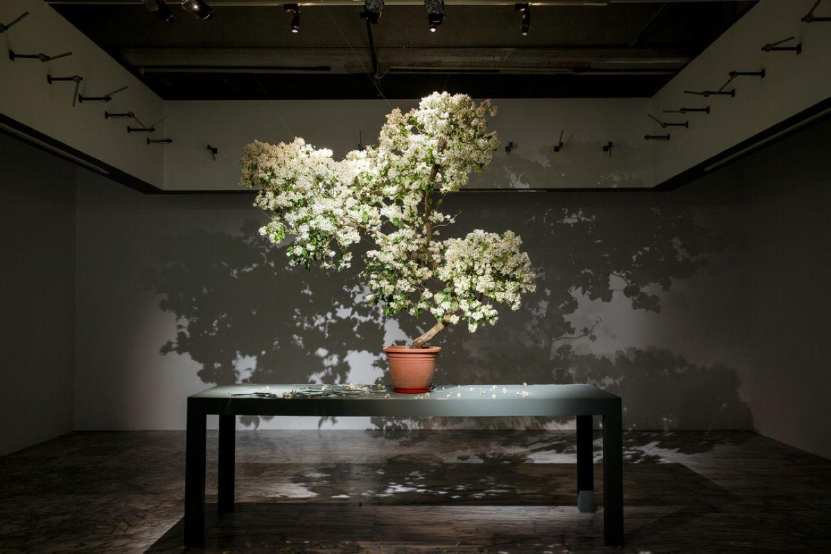 Chuang Chih-Wei - Reborn Tree, 2020 © Chuang Chih-Wei