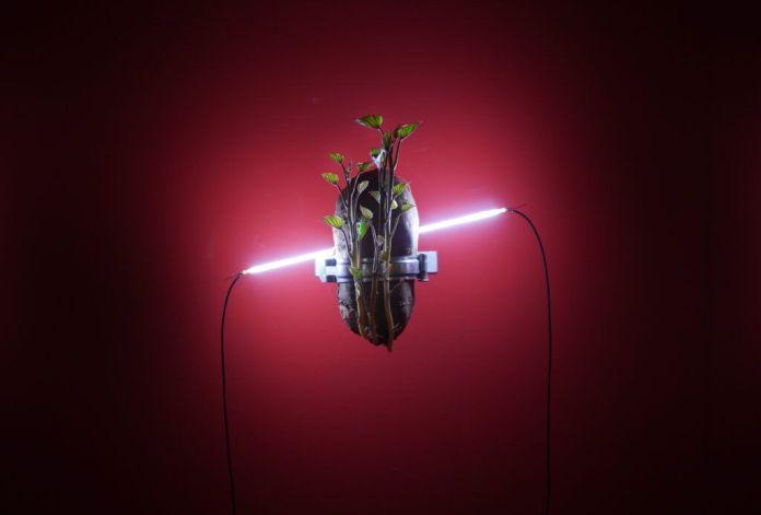 Chuang Chih-Wei -Infection Series; Commensalism, 2019 - Biennale Chroniques 2020 - Éternité part 2 - Friche la Belle de Mai © Chuang Chih-Wei