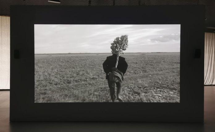 Enrique Ramírez - Jardins Migratoires, 2021 - Vue de l'exposition Jardins migratoires aux Rencontres Arles 2021