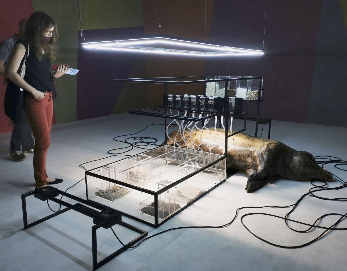 Loris Gréaud - Broccoli, 2021 - Broccoli - Loris Gréaud + Yvon Lambert à la Collection Lambert – Avignon