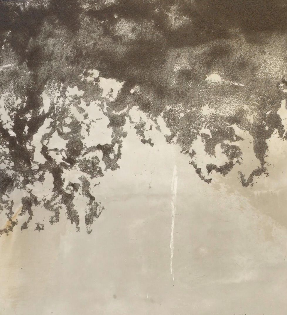 Olivier Nattes - Fresque jardin du Refuge (détail). Graines de chia et eau, 2020