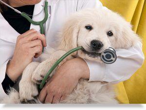 encuestas-satisfaccion-para-clinicas-veterinarias