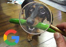 busqueda imagenes veterinarias en google