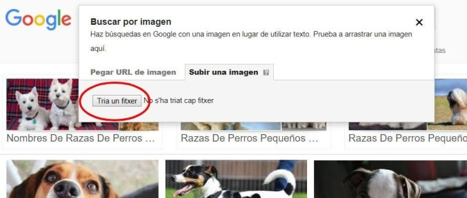 marketing por imagenes para veterinarios