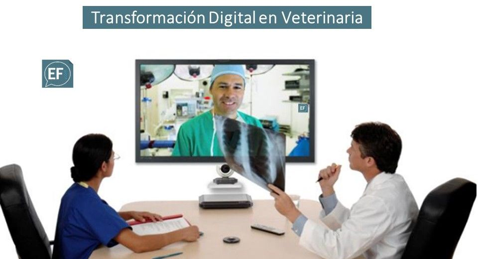 Transformación Digital Clinicas Veterinarias Marketing Digital