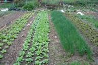 gardenrows