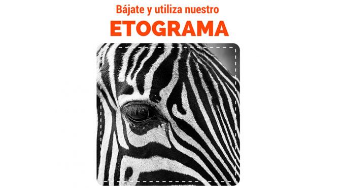 Cebra. Imagen destacada de artículo: plantilla para etogramas.