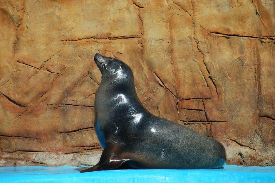 El entrenamiento de osos y leones marinos, debe ser obligatório en estos animales.