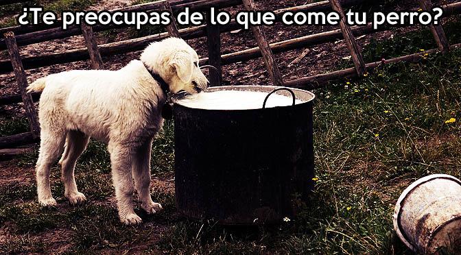 La alimentación y comida correcta de los perros