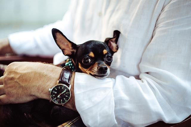 Conductas y comportamientos sanos de nuestros perros y mascotas.